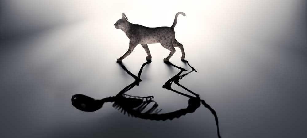 sap hana schrodingers cat christian klein [shutterstock: 227038018, Mopic]